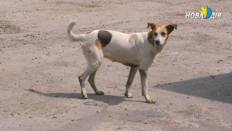 Бродячие собаки - нерешаемая задача для Рубежанского горсовета