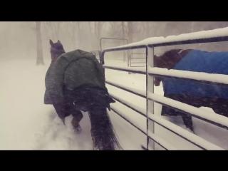 Лошадки не оценили