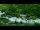 Japan beautiful nature Oirase Aomori 奥入瀬渓流スロー映像