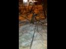 С моей мышкой на ночной прогулке домой пришли с трофеем
