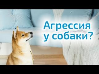Агрессия у собаки. Причины и пути решения проблемы