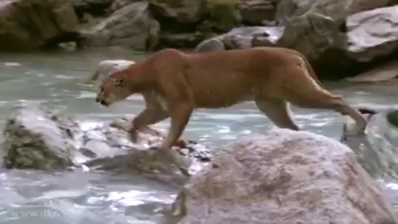 Охота на медвежонка