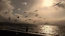 Максим Аверин on Instagram Опять осенний блеск денницы Дрожит обманчивым огнём И уговор заводят птицы Умчаться стаей за теплом И болью сладост
