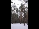 15-03-2018. Dubna skogen