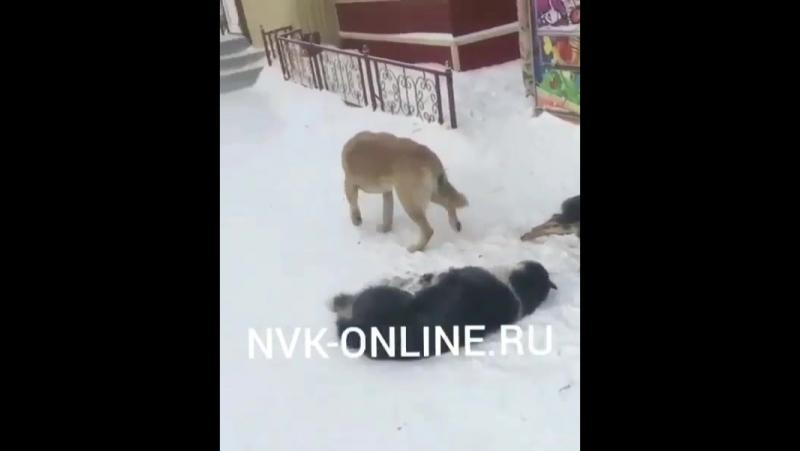 В центре города Нерюнгри неизвестный совершил отстрел собак