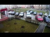 В Липецке выбросили кота с девятого этажа на капот Инфинити