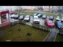 В Липецке выбросили кота с девятого этажа на капот «Инфинити»