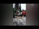 Медведь застрял в окне вагона под Нижневартовском 1