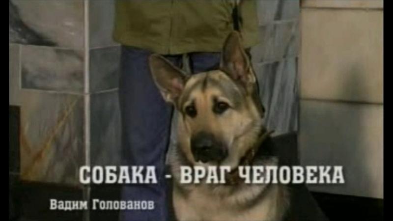 Возвращение Мухтара - 1 сезон - 22 серия - Собака - Враг Человека