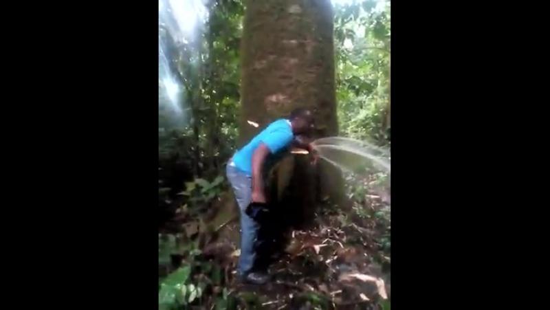 ..лесной гидрант......снято в Buea dans на Юго-Западе Камеруна