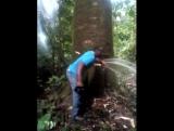 ..лесной гидрант....)))..снято в Buea dans  на Юго-Западе Камеруна