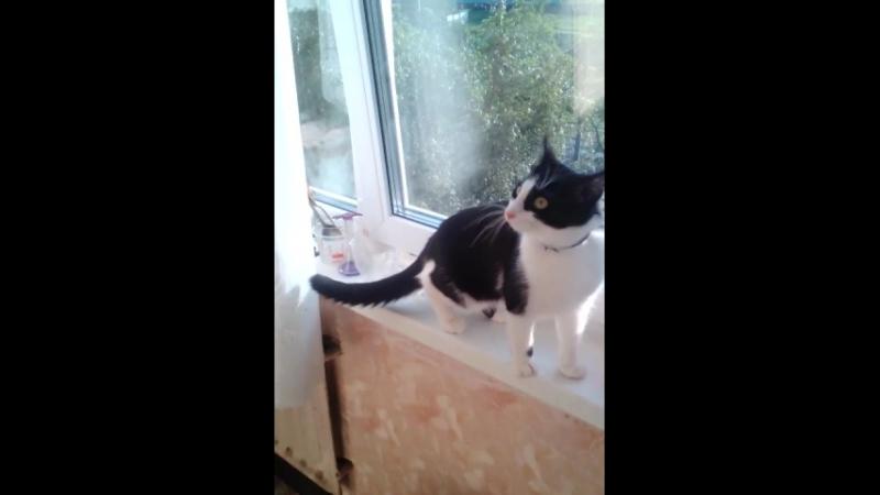 Пандушка, пытается поймать мушку!🤗🐝