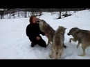 И волки помнят добро