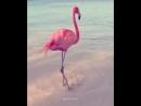 Michael Sembello – Flashdance Flamingo 1983