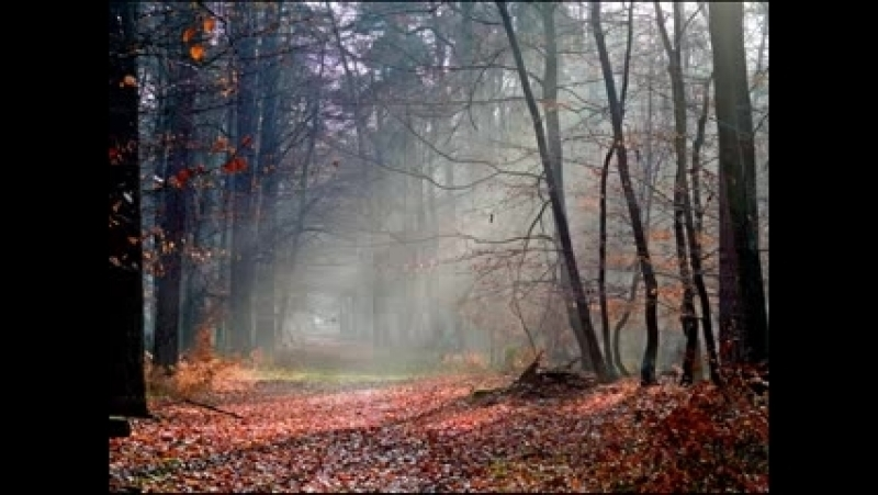 November Calls - Jon Lord