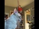 Любвеобильный котик 😻