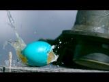 Уничтожение пасхальных яиц в супер замедленной съемке