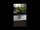 Как шмель танцует тв рк (240p).mp4