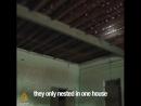 L'un des mets les plus coûteux d'Asie est un nid d'oiseau ... il s'agit de nids faits de salive d'oiseau, et prélevés pour être
