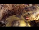 Порно с черепахами. Самка получает хуй от самца