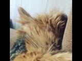 Вот так спит моя Дуся , свесив голову 🤪