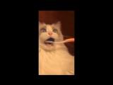 Как взорвать мозг Вашего кота?