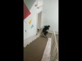 Жучок-паучок от Тимура