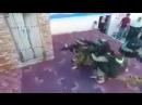 А вот вам милое видео с выпускного в палестинском детском саду в секторе Газа. Похожее ведь мы видели у себя в стране буквальн