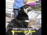 В Аргентине пес провел 11 лет у могилы своего хозяина