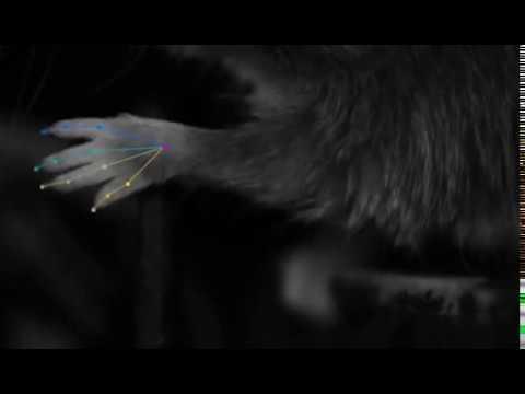 Компьютерное зрение проследит за лабораторными животными без меток<iframe width=