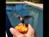 Колибри - самая маленькая птица в мире. Размеры птичек не превышают 5 см
