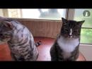 CAT RAT - THUG LIFE.mp4