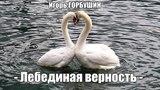 Вернуться в 70е - Лебединая верность - Игорь Горбушин (Official audio) 2018