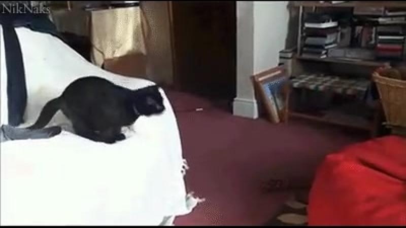 Кот, прыг - шмяк.