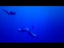 Как и ты. Человек и Дельфин.