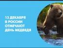 13 декабря в России отмечают День медведя