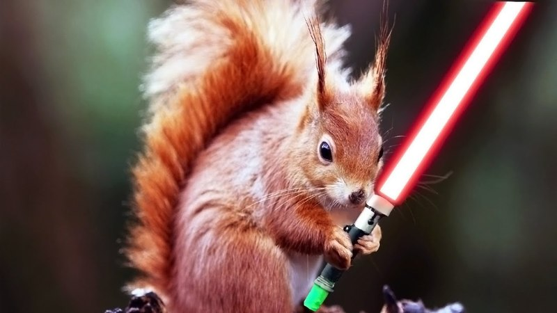 Squirrel and a nut. Why did the Jedi squirrels become Sith