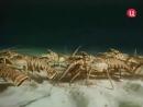 1976 Великий поход лангустов Подводная одиссея команды Кусто