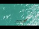 У острова Пхукет обнаружили двухметрового крокодила, поймать его не удалось