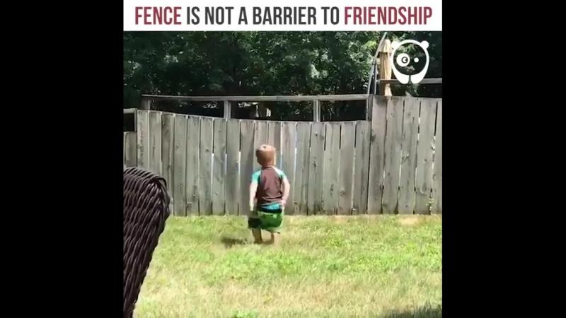 Забор – не помеха для настоящей дружбы