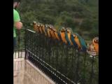 Прилетели голуби)