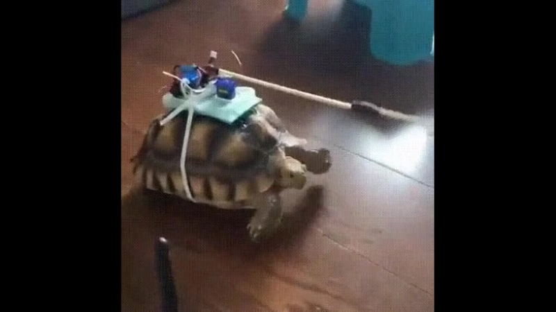 Черепаха на пульте управления