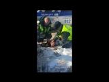 Инспекторы ДПС в Подмосковье спасли пострадавшую собаку