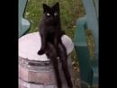 Кот бездельник
