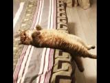 Я после ночной смены 😝 когда просыпаюсь, свой постель не узнаю🙈🙈🙈 #капецкакялежу)