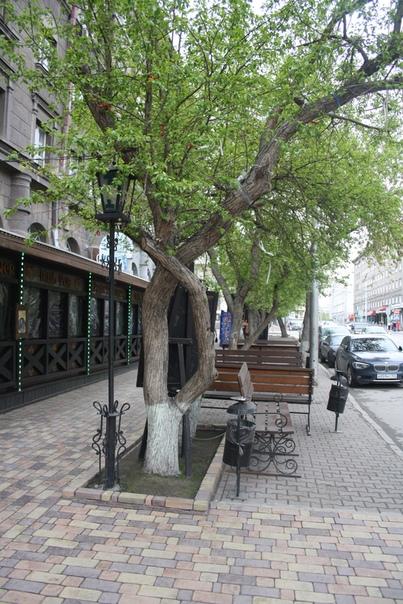 Новосибирское благоустройство. Видимо, со всей улицы сгрузили все лавки сюда.