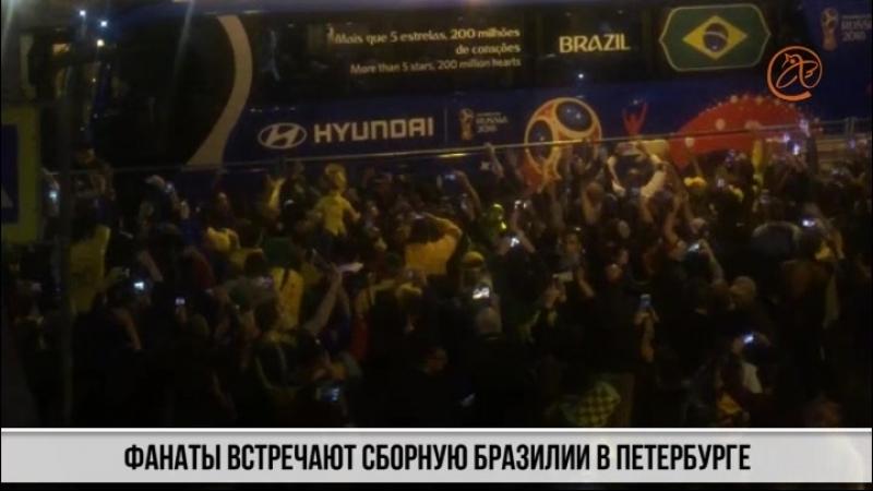 Как болельщики сборной Бразилии сошли с ума от приезда команды в Петербург, а злобная канарейка навестила стадион