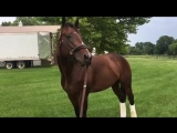 Bolt d'Oro on the farm in Kentucky