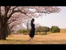 【オリジナル振付】花降らし 踊ってみた【ひばり】 sm33013593