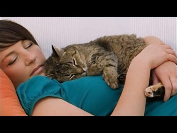 Почему кошка ложится на человека Интересные факты о кошках Приколы с кошками